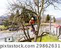Lumberjack with saw and harness pruning a tree. 29862631