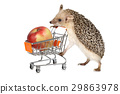 African hedgehog with apple 29863978