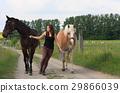 馬兒 動物 馬 29866039