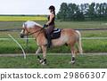 馬兒 動物 馬 29866307