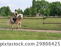 A young woman riding a horse Haflinger 29866425