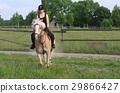 馬兒 動物 馬 29866427