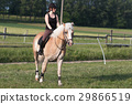 A young woman riding a horse Haflinger 29866519