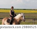 馬兒 動物 馬 29866525