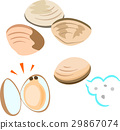 baby-neck clam, sea-shell, shell 29867074