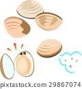 蛤蜊 外壳 贝壳 29867074