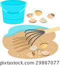 贝类收集 外壳 贝壳 29867077
