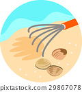贝类收集 外壳 贝壳 29867078
