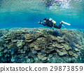 珊瑚礁 珊瑚 海 29873859