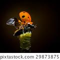 Ladybug starts takeoff 29873875