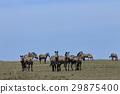 animal animals zebra 29875400