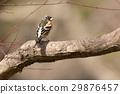 燕雀 鳥兒 鳥 29876457