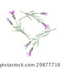 熏衣草 花朵 花 29877716