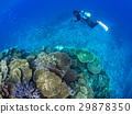 珊瑚礁 珊瑚 海 29878350