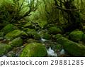 屋久岛 白谷雲水峡 森林 29881285