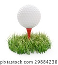 golf ball on tee and green grass isolated on white 29884238