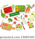 Collection Of Different Fresh Organic Vegetables 29885085