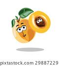 apricot, fruit, leaf 29887229