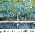 deciduous, forest, landscape 29888344