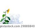 向日葵 花朵 花 29889840