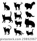 ชุดของเงาต่าง ๆ ของแมว 29892067