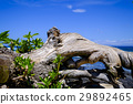 Sea of Hawaii island 29892465