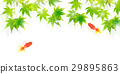 goldfish, goldfishes, gold 29895863