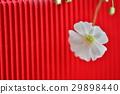 植物 花 春季花卉 29898440