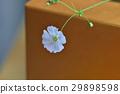 植物 花 春季花卉 29898598