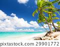 沙子 熱帶海洋 景色 29901772