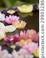 水 花朵 花卉 29903286