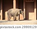 코끼리, 아프리카 코끼리, 히가시야마도부츠엔 29909129