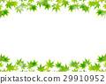 槭樹離開夏天背景 29910952