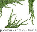 realistic vector ivy set 29916418