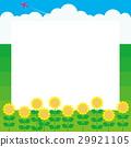 summer, Thunderhead, sunflower 29921105