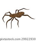 spider isolated illustration 29922930