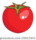 tomato isolated illustration 29922941
