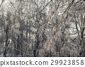 texture of natural snow and twigs 29923858