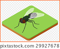 fly insect musca domestica 29927678