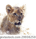 Young Lion watercolor 29936250