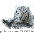 White Tiger watercolor 29936254