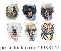 Watercolor drawing animal portrait on white 29938141