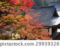 진고지, 가을, 단풍 29939326