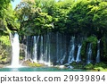 waterfall, shiraito, falls 29939894