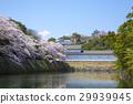 Cherry blossoms in Hikone castle Nakahori in full bloom 29939945