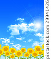 sunflower, sunflowers, summer 29941426