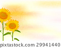 sunflower, sunflowers, summer 29941440