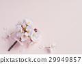 花朵 花 花卉 29949857