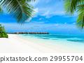 海灘 馬爾代夫 夏天 29955704