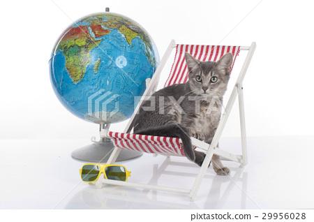 Cat on holidays 29956028